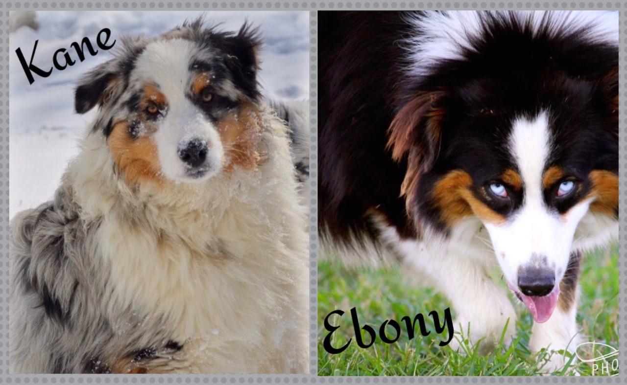 Kane and Ebony
